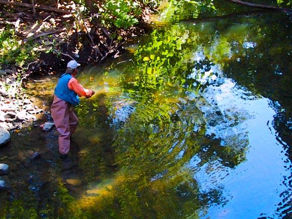 creek_fishing_final