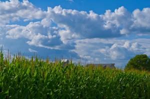 corn_clouds
